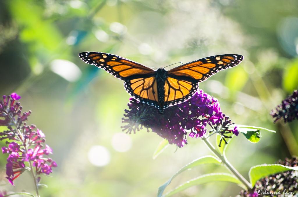 butterfly recess